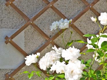 Idéal pour embellir votre jardin